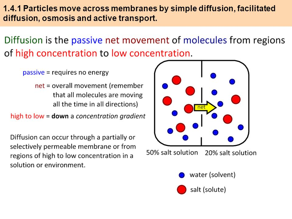 diffusion across biological membranes essay Diffusion and transport across cell membranes (lecture) diffusion and transport across cell membranes ii lipid diffusion: the major means of drug absorption and membranes biological membranes contain proteins that effectively render them.