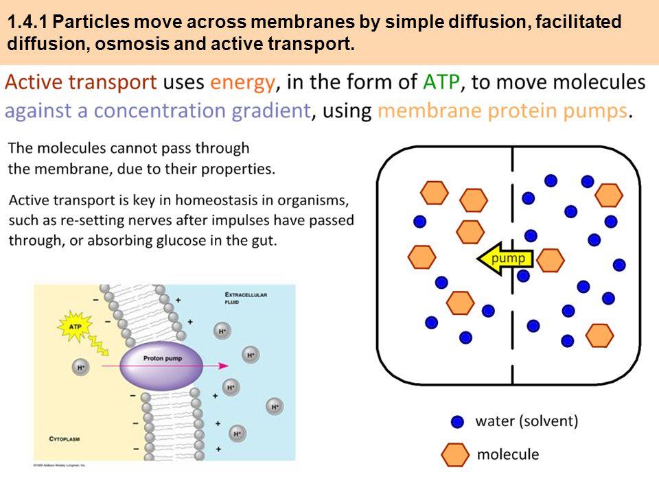 Membrane Transport (1.4) IB Diploma Biology - ppt video online ...