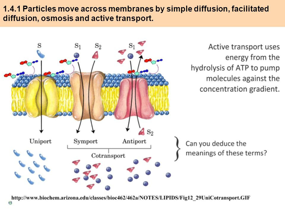 transport and diffusion across cell membranes pdf