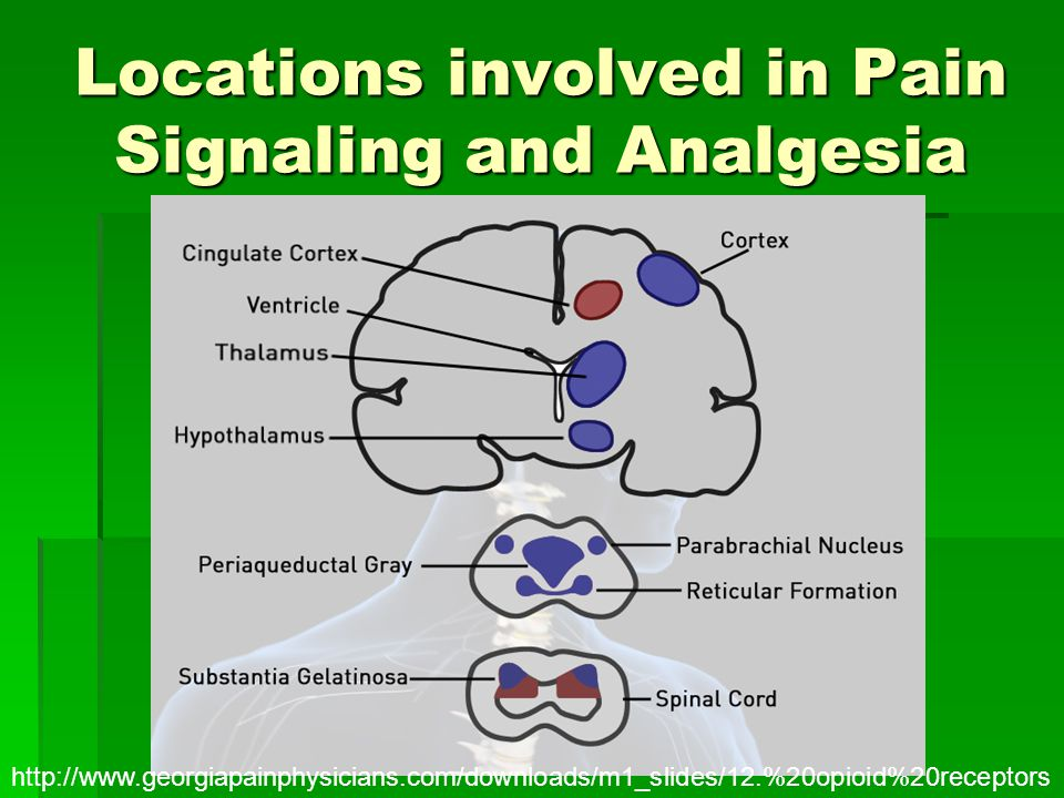 Locations involved in Pain Signaling and Analgesia