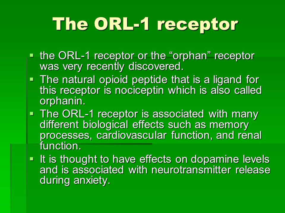 The ORL-1 receptor the ORL-1 receptor or the orphan receptor was very recently discovered.