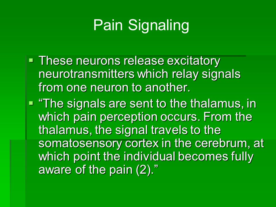 Pain Signaling These neurons release excitatory neurotransmitters which relay signals from one neuron to another.