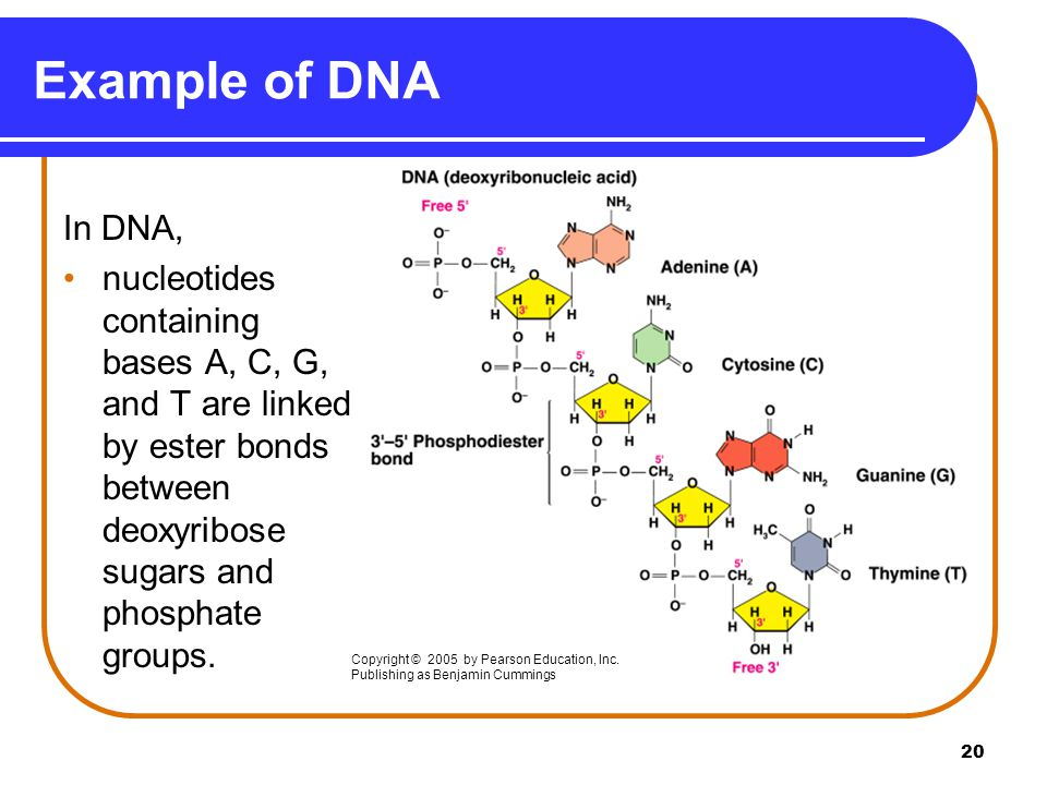 nucleic acid and protein sythesis Translation is the process that changes the rna message into the actual protein it occurs at the surface of the ribosome each amino acids is coded for by 3 bases (this is known as a triplet code) there are 20 different amino acids, but only 4 different bases in dna/rna a messenger rna codons the genetic code is the same for.