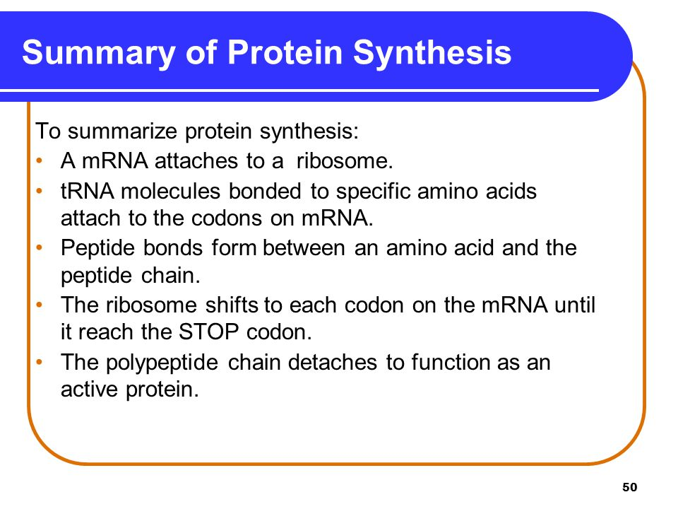 what are the 2 stages of protein synthesis Protein synthesis concept map  three stages of  they are rna-protein complexes that combine with unmodified pre-mrna and various other proteins to form.