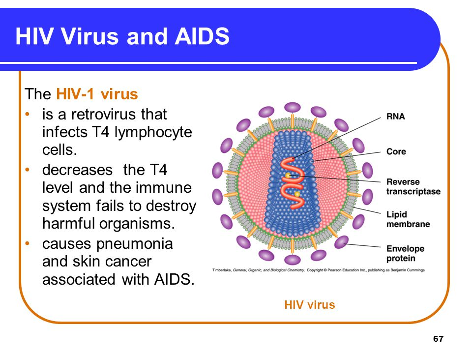 a transcription of a program on the subject of aids virus Transcription factor gata-1 potently represses the expression of the hiv-1 coreceptor ccr5 in human t cells and dendritic cells.