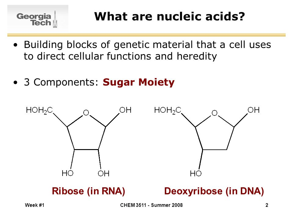 the components and functions of the rna and dna The sugar found in rna is ribose, whereas the sugar found in dna is deoxyribose, both of which are 5-carbon sugars both types of sugars are important components of nucleotides.