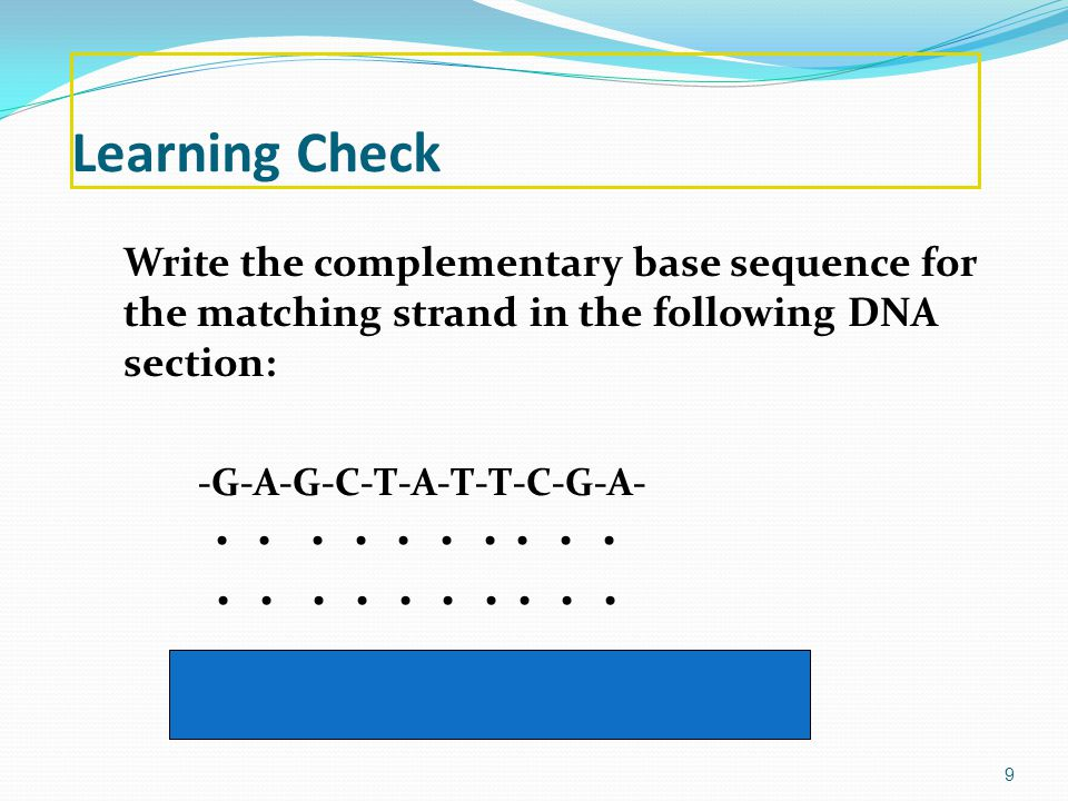 Learning Check Write the complementary base sequence for the matching strand in the following DNA section: