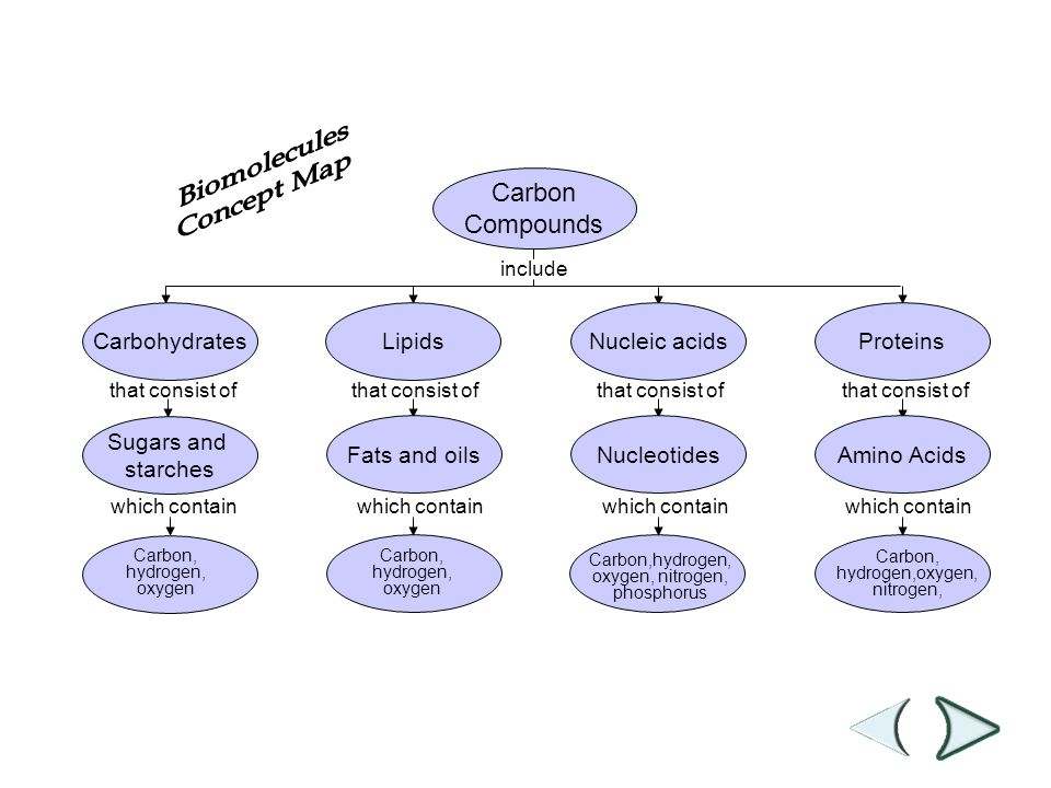 Mrs McKinney PAP Biology ppt download – Carbon Compounds Worksheet
