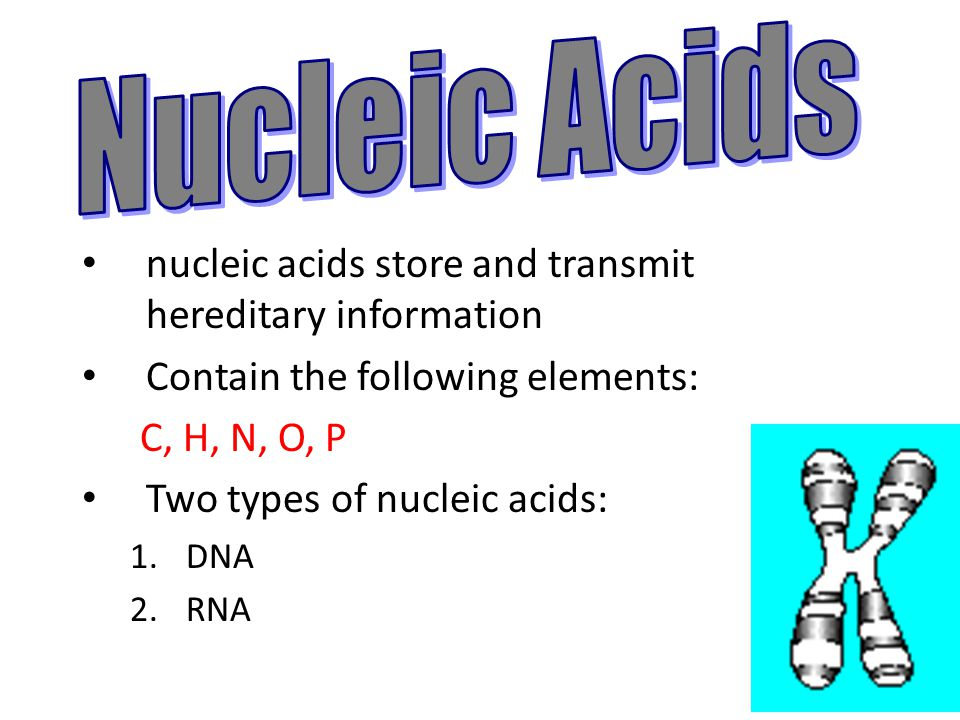 elements of nucleic acids