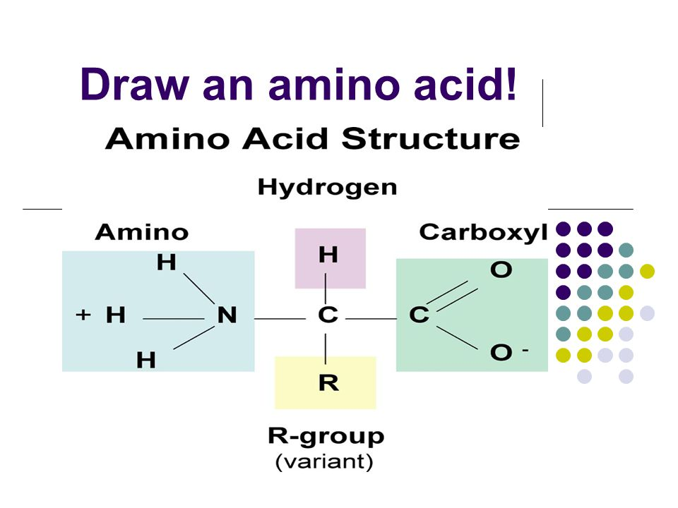 Macromolecules: What cells are made of - ppt video online ...