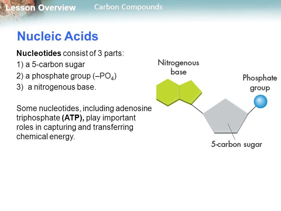 Nucleic Acids Nucleotides consist of 3 parts: 1) a 5-carbon sugar