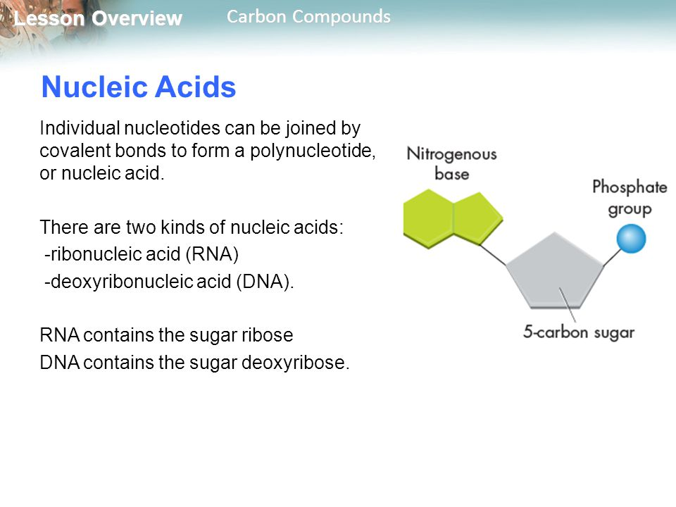nucleic acids study guide Nucleic acids and protein synthesis study guidepdf - 9d754c300c89f22a4b0b2ea8ccb13564 nucleic acids and protein synthesis study guide birgit.