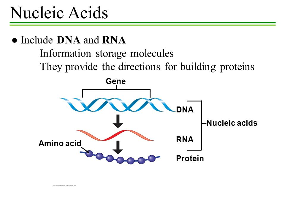 nucleic acid and rna world Nucleic acid nucleic acid is the carrier of genetic information, and it is of two principal types: dna (deoxyribonucleic acid) and rna (ribonucleic acid.