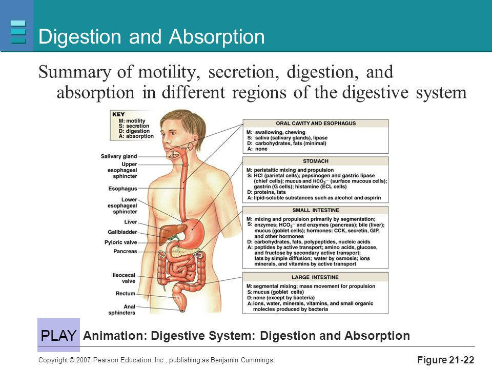 digestion absorption Absorption of the majority of nutrients takes place in the jejunum, with the following notable exceptions: iron is absorbed in the duodenum vitamin b12 and bile salts are absorbed in the terminal ileum water and lipids are absorbed by passive diffusion throughout the small intestine.