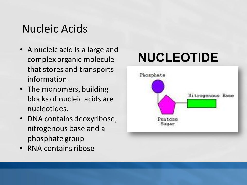 Nucleic Acids NUCLEOTIDE