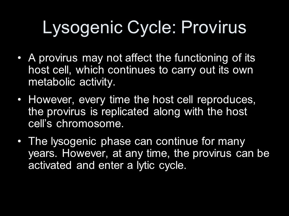 Lysogenic Cycle: Provirus