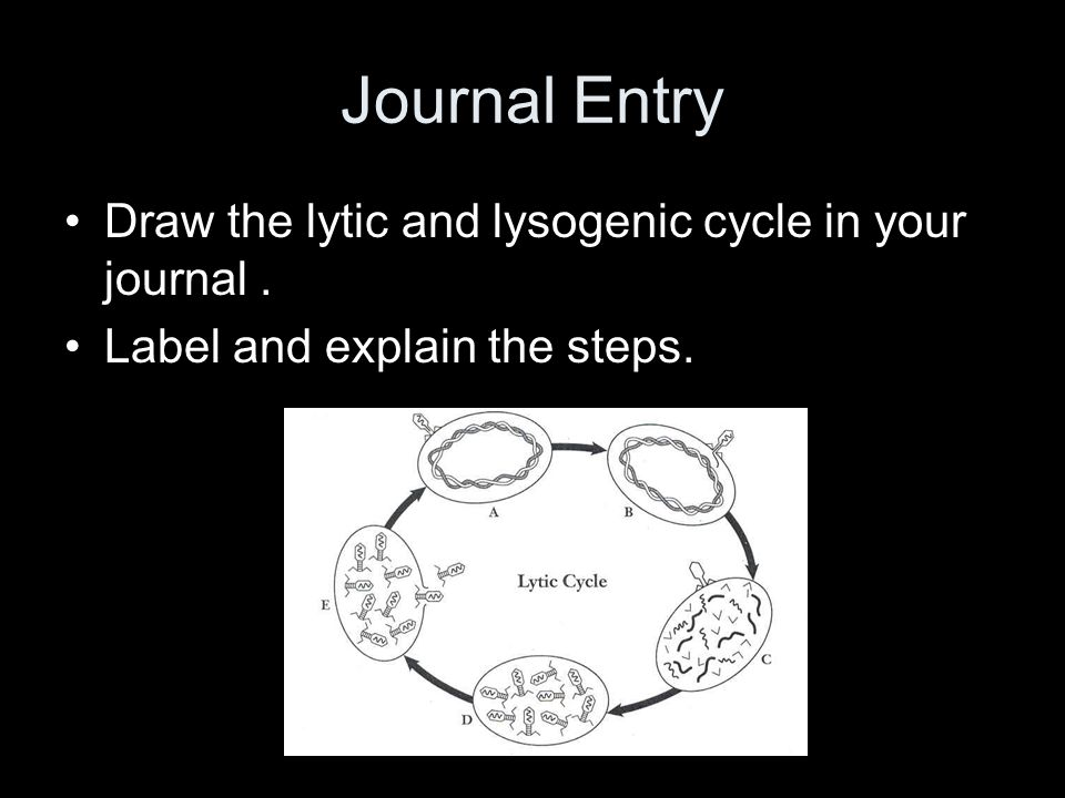 Journal Entry Draw the lytic and lysogenic cycle in your journal .