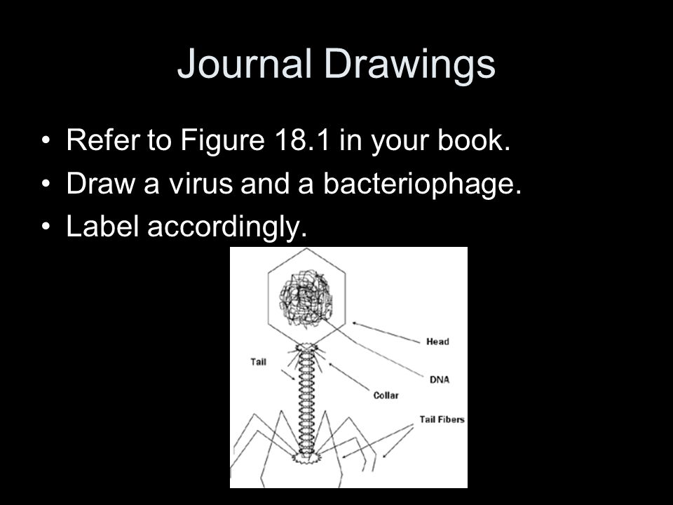 Journal Drawings Refer to Figure 18.1 in your book.