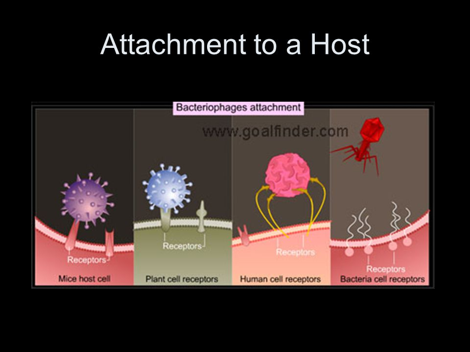 Attachment to a Host