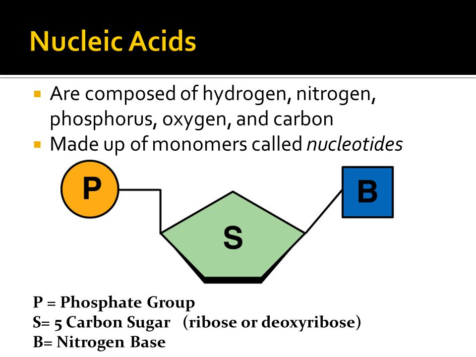 Nucleic Acids Are composed of hydrogen, nitrogen, phosphorus, oxygen, and carbon. Made up of monomers called nucleotides.