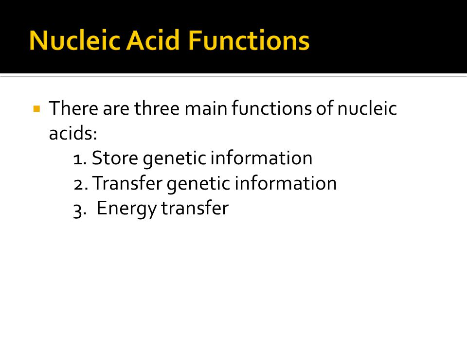 Nucleic Acid Functions