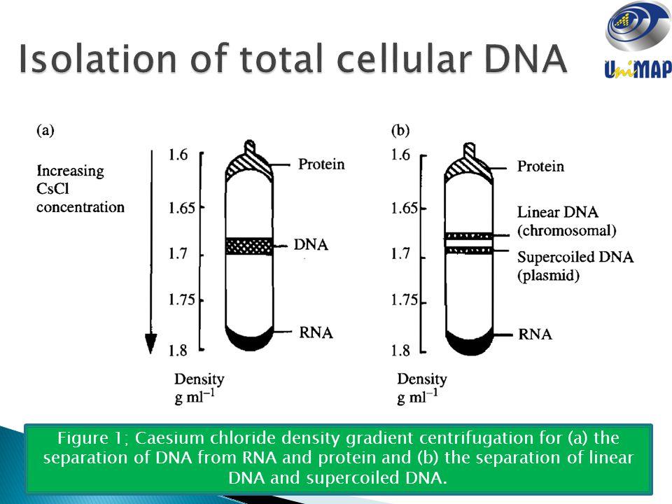 nucleic acids ptt 202 organic chemistry for biotechnology ppt video online download. Black Bedroom Furniture Sets. Home Design Ideas