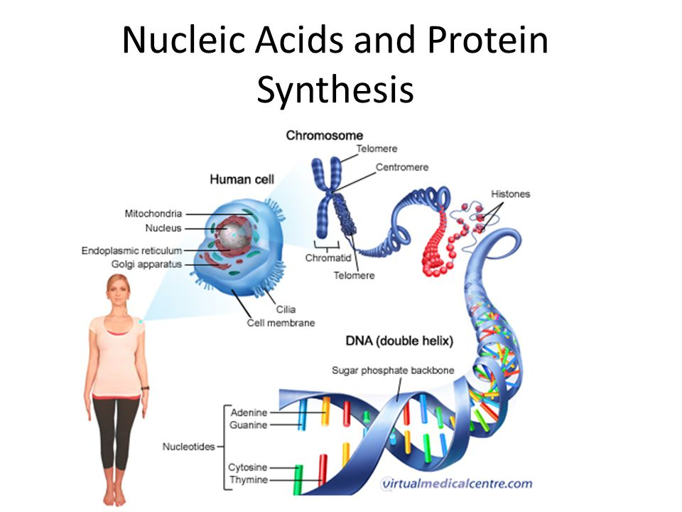 protein and nucleic acid relationship problems