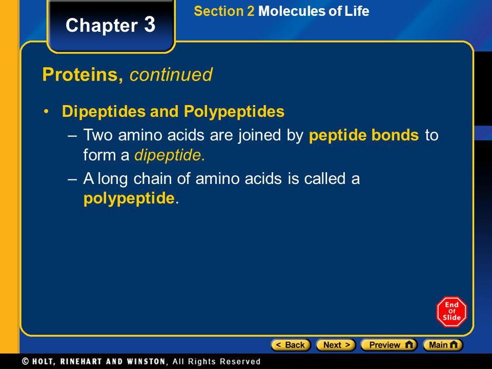 Chapter 3 Proteins, continued Dipeptides and Polypeptides