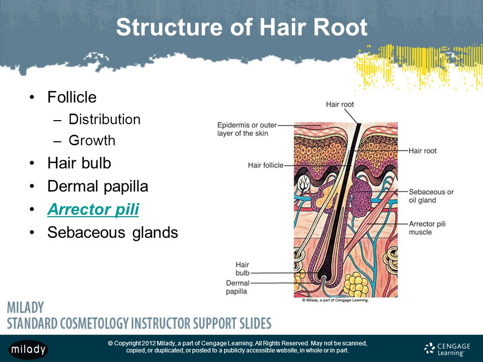 Hair Structure Diagram Milady Images Free Download List Of
