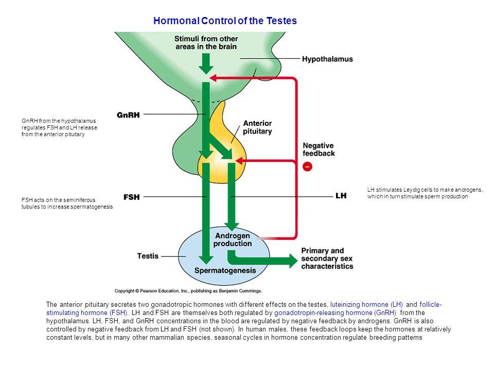 Gnrh Feedback Loop: UNIT 12 ANIMAL ANATOMY AND PHYSIOLOGY Excretory, Endocrine