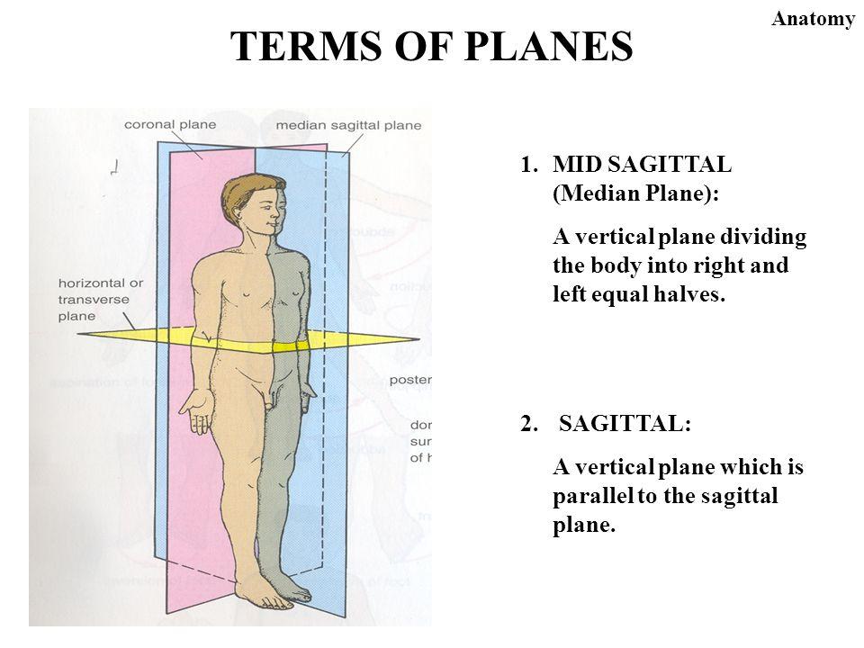 Define tissues anatomy