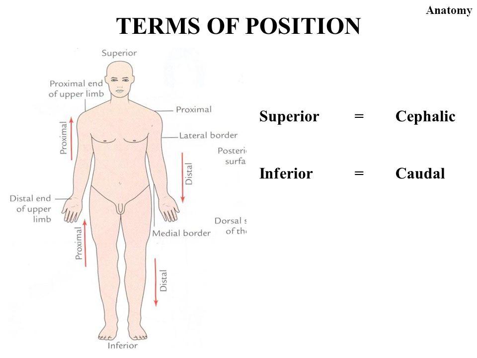 Magnificent Define Superior Anatomy Images - Anatomy Ideas - yunoki.info
