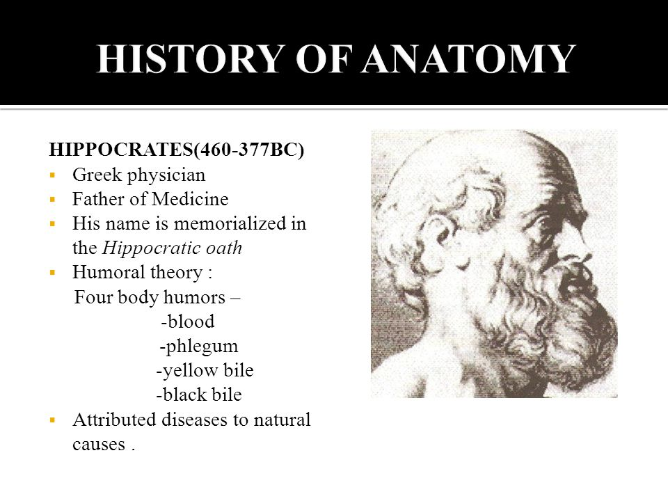 Father of anatomy