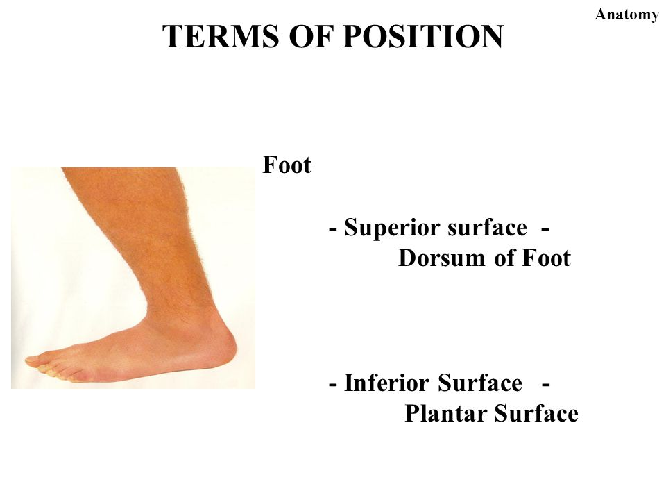 Surface anatomy terms