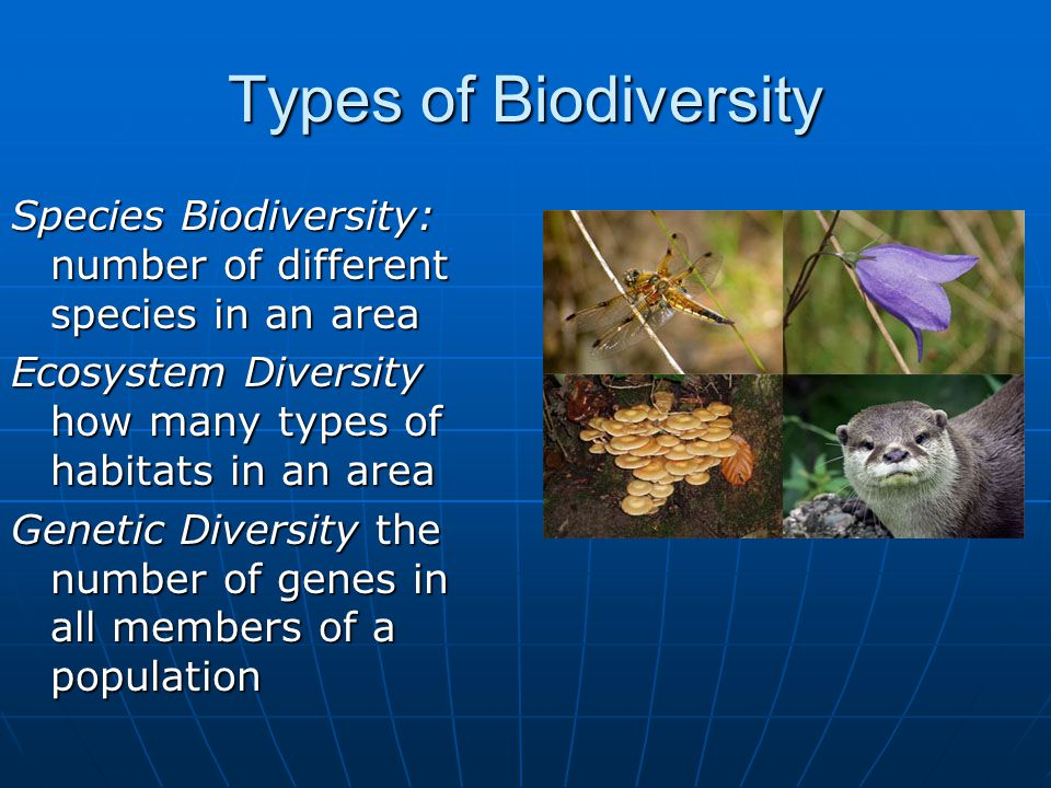 species diversity 10 1 in However, the role of genetic diversity within species, relative to the one of   journal of plant ecology, volume 10, issue 1, 1 february 2017,.
