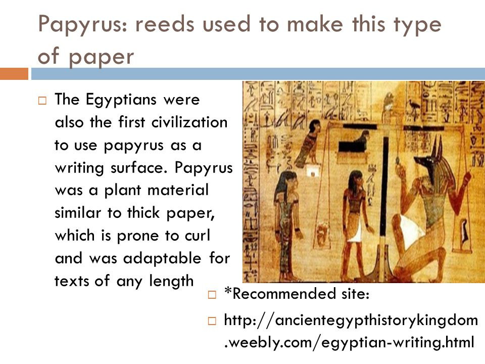 Papyrus: reeds used to make this type of paper