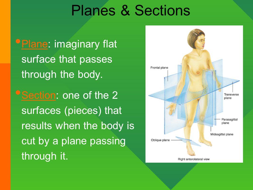 Groß Define Section In Anatomy And Physiology Fotos - Anatomie Und ...