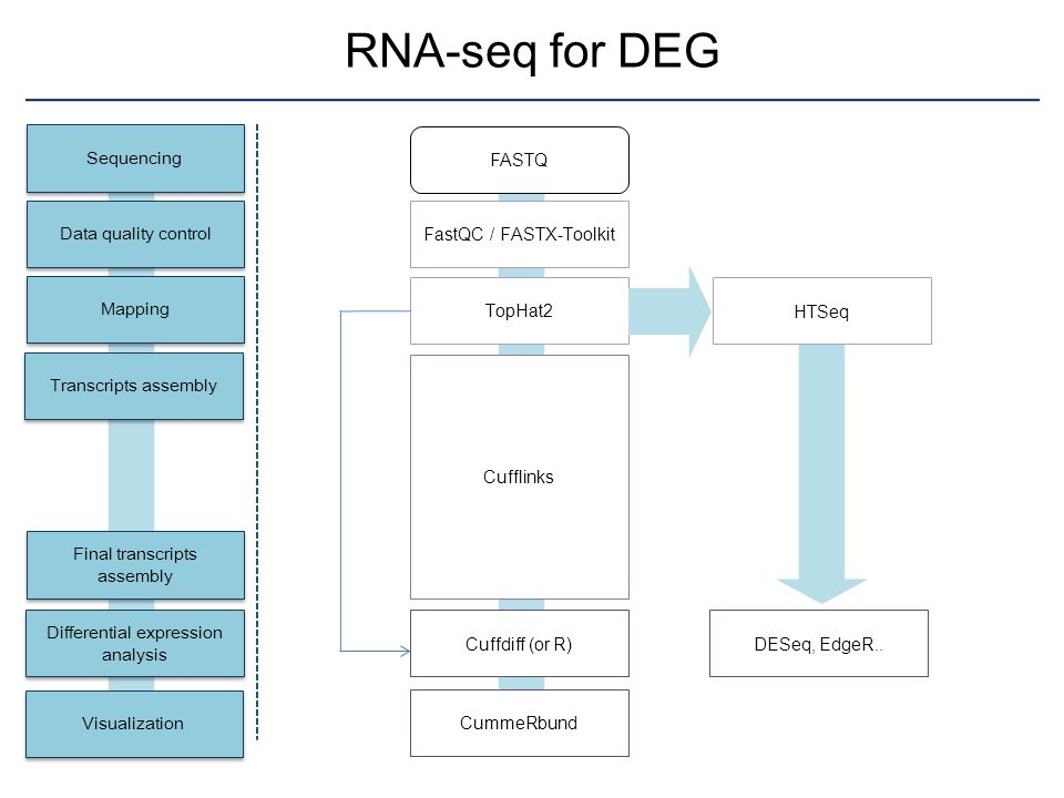 RNA-seq for DEG Sequencing FASTQ Data quality control