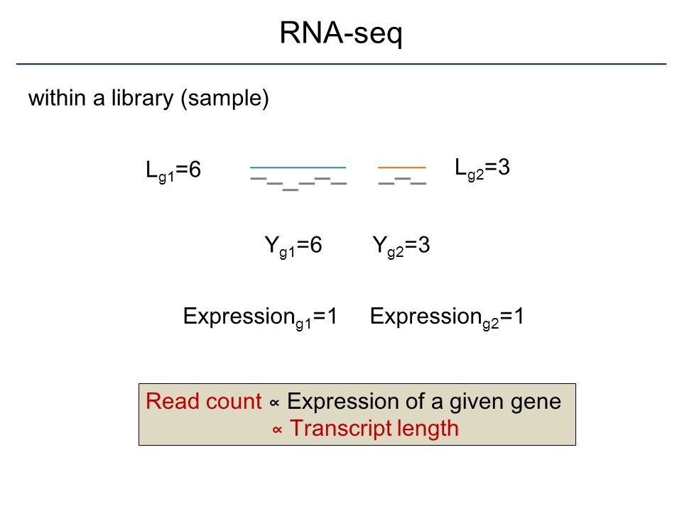 RNA-seq within a library (sample) Lg2=3 Lg1=6 Yg1=6 Yg2=3