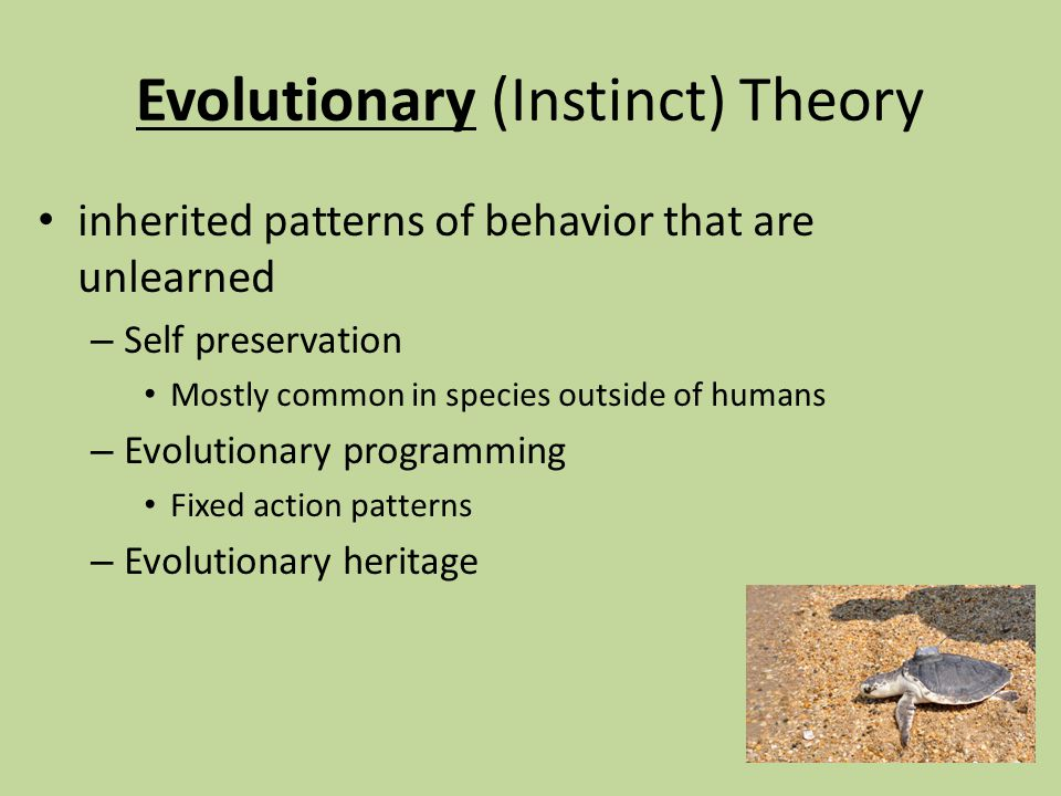 instinct theory The instinct theory of motivation suggests that behaviors are motivated by  underlying instincts learn about how instinct theory influences.