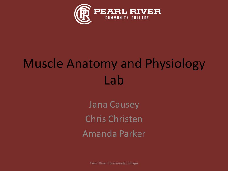 Muscle Anatomy and Physiology Lab - ppt video online download