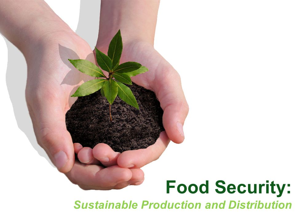 Food Security: Sustainable Production and Distribution