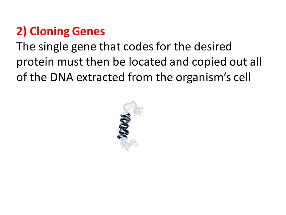 2) Cloning Genes The single gene that codes for the desired protein must then be located and copied out all of the DNA extracted from the organism's cell