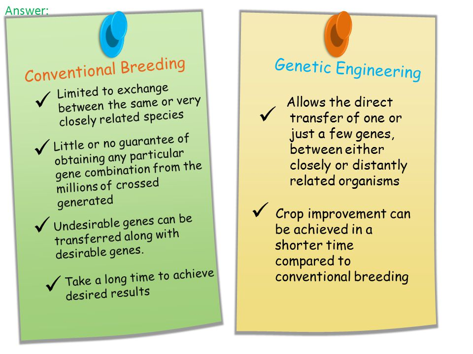       Conventional Breeding Genetic Engineering Answer: