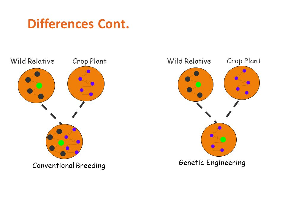 Conventional Breeding