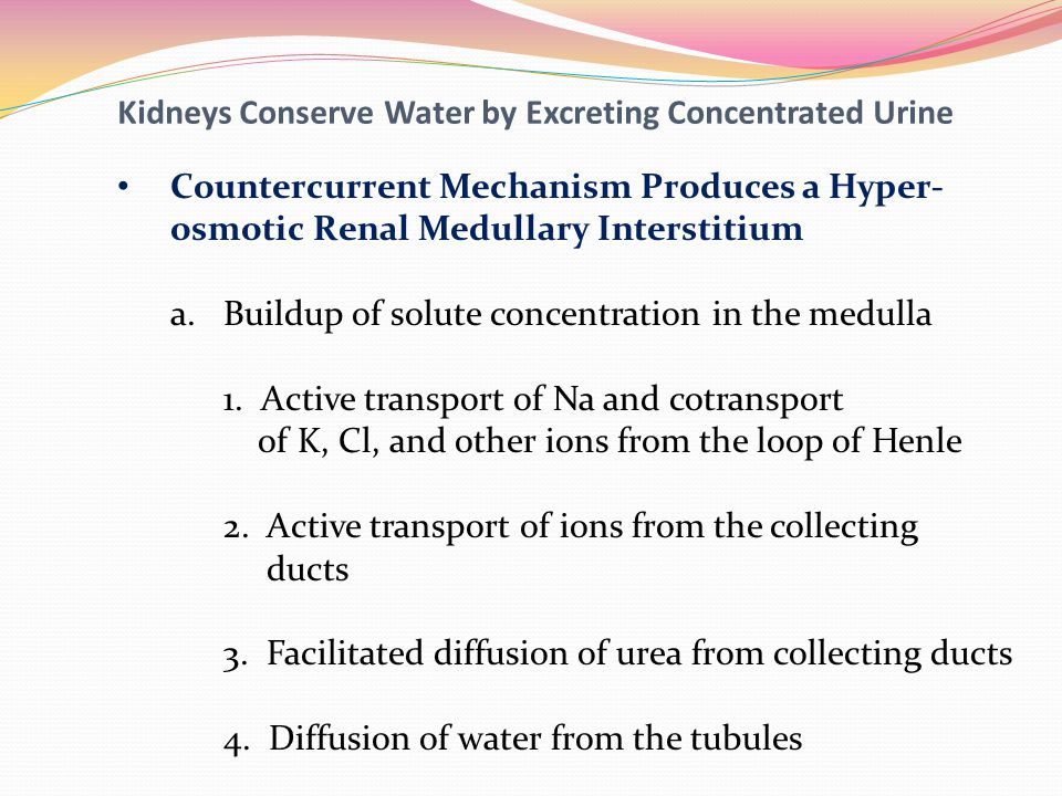 Kidneys Conserve Water by Excreting Concentrated Urine