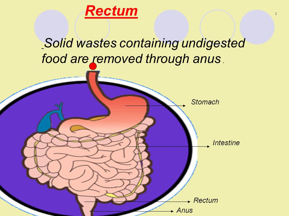 Removal of solid waste through the anus
