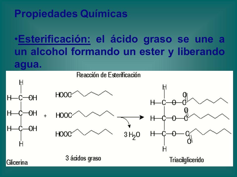 Propiedades Químicas Esterificación: el ácido graso se une a un alcohol formando un ester y liberando agua.