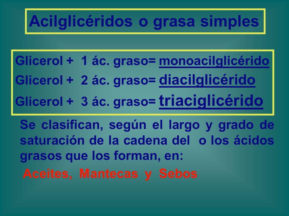 Acilglicéridos o grasa simples