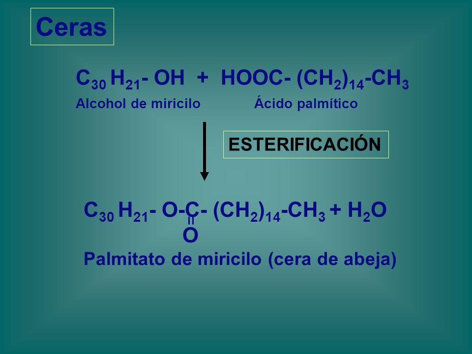 Ceras C30 H21- OH + HOOC- (CH2)14-CH3